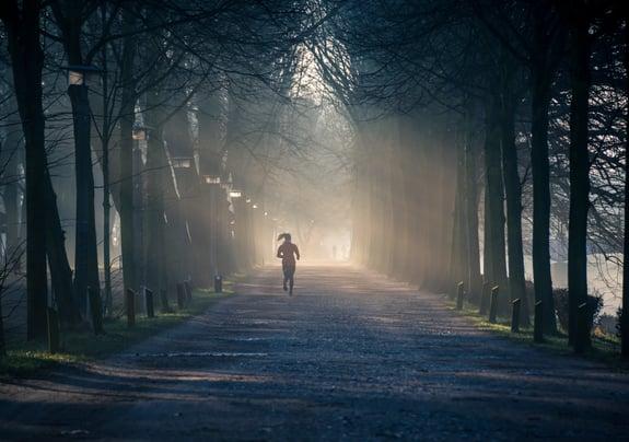 backlit-early-fog-878151