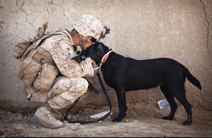 soldier-dog-companion-service.jpg